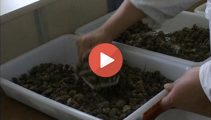 video universcience banque pour les sols afes