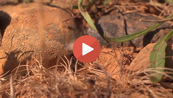 video universcience quand la nature sauve la nature afes