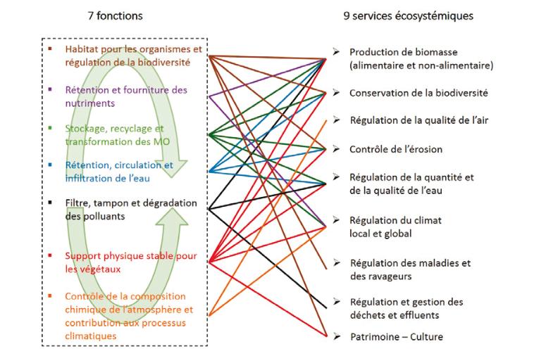 Calvaruson et al. 2021