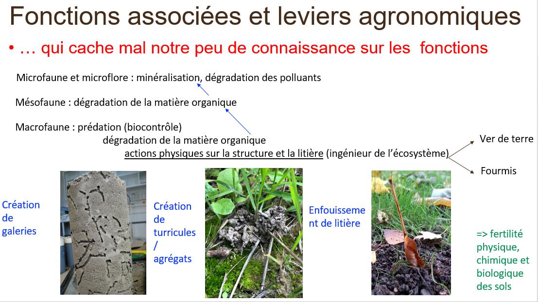Fonctions associées à la biodiversité du sol par Yvan CAPOWIEZ